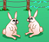 Click here & Play to Rabbit's Breeder the online game !