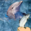 Click here & Play to Hungry Dolphin Game the online game !