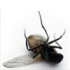 Click here & Play to Just kill fly the online game !