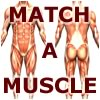 Click here & Play to Match-A-Muscle the online game !