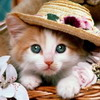 Click here & Play to Pussie Kitten Photo Jigsaw Puzzle the online game !