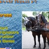 Click here & Play to Puzzle Mania v2 - Horses the online game !