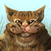 Click here & Play to River Cat the online game !